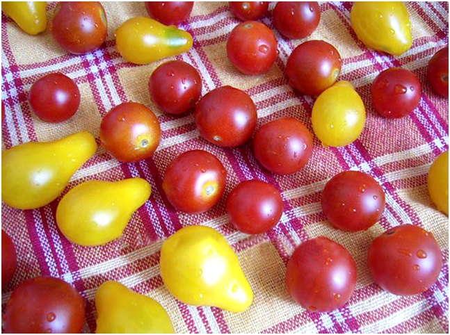 подготовить томаты