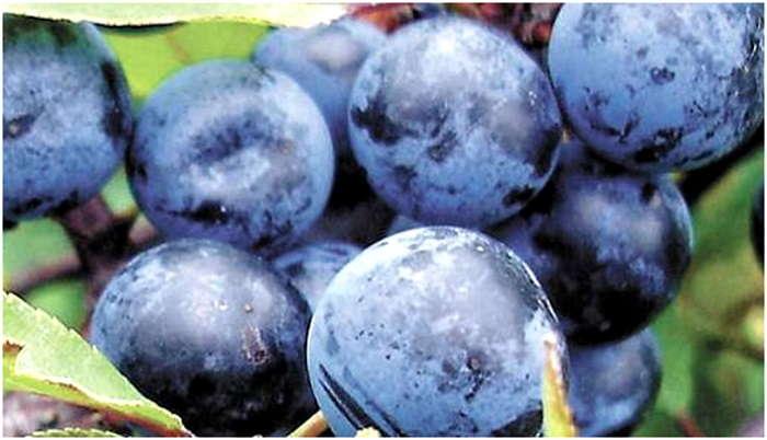 выбрать плоды